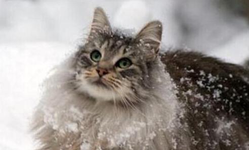 怎样塑造猫猫的优良生活作息?猫奴必读!