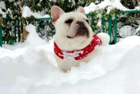 如何训练小狗看东西?训练小狗方法!