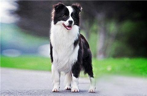 还不知道如何训练狗狗传出威协?好多个小技巧点醒你!