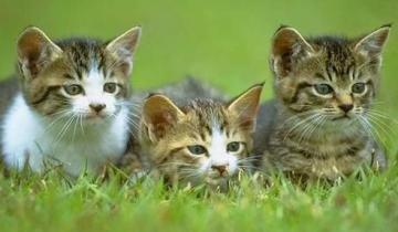 猫咪足部护理有什么妙招