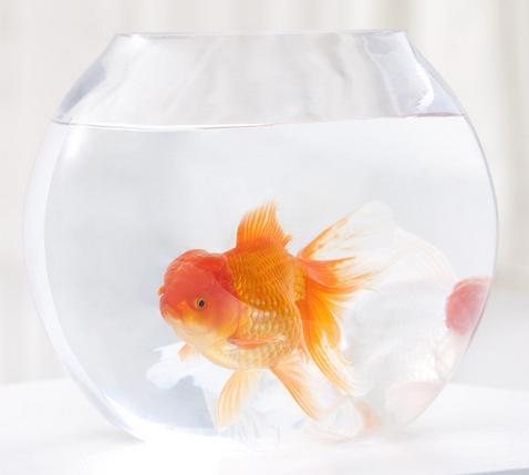 挑选什么样的宠物鱼好看又好养