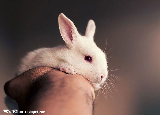 【兔子高清图片】可爱萌兔从出生到长大的图片