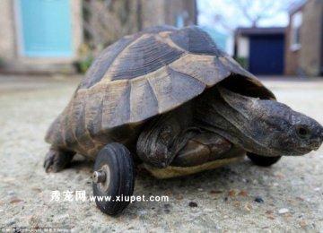 忍者神龟新成员―四驱坦克龟