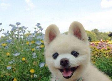 帅气依旧的俊介狗狗