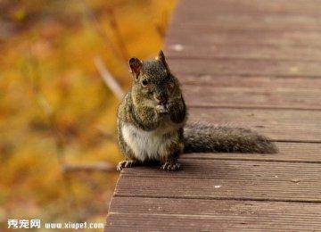 【松鼠图片】闲云野鹤的松鼠