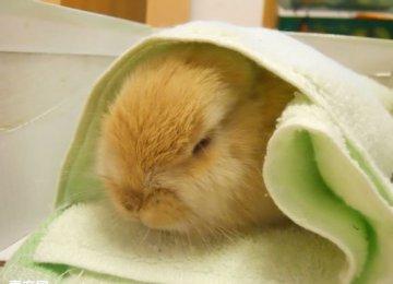 【宠物兔图片】兔子成长图集