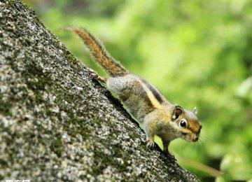 松鼠的分类及图片