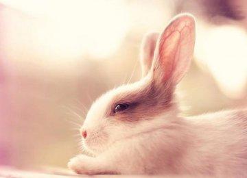 兔子的分类及清新图片