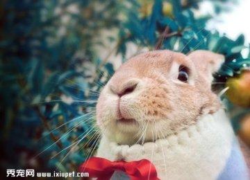 体型巨大照样萌萌哒的兔子