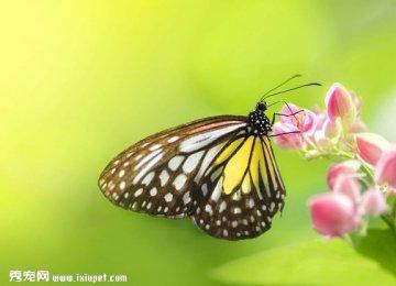【蝴蝶图片】色彩丰富的蝴蝶图片