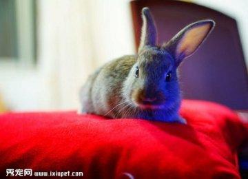 【兔子图片】虽然你是肉兔,可是依旧爱你