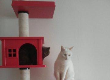 如何挑选适合自家的猫