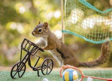 什么境界才能拍出如此的松鼠生活照