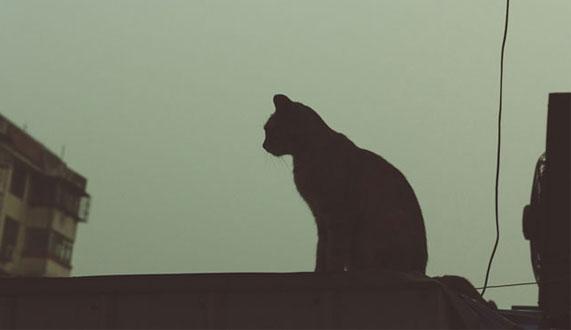 这么多流浪猫,最后一张图片触动了我的心!