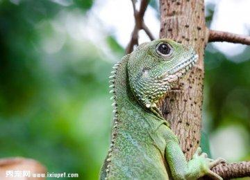 冷血动物蜥蜴高清特写鉴赏【图】