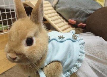 兔子图片_可爱小兔子图片_兔子照片大全