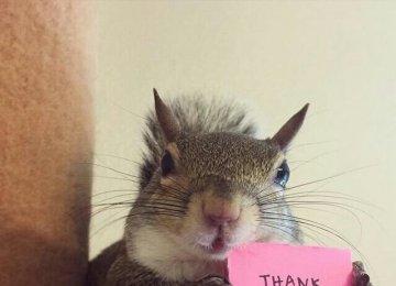 松鼠的图片_松鼠吃坚果图片_小松鼠高清写真