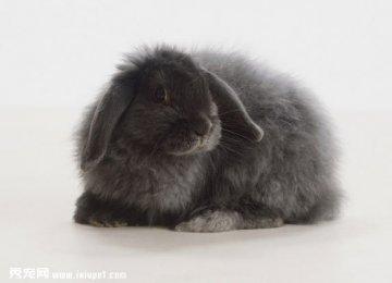 兔子的眼睛颜色和视物
