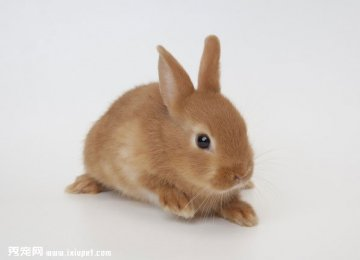 兔子可不可以吹空调?