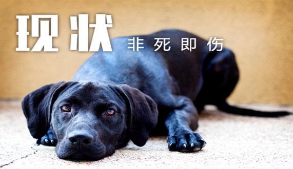 浅谈宠物美容、寄养类O2O平台为何非死即伤!