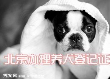 北京办理养犬登记证流程