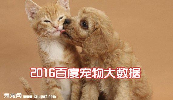 宠物行业经营者必看:2016百度宠物大数据