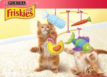 喜跃幼猫粮鸡肉鱼肉牛奶和菠菜味全价猫粮1.2kg