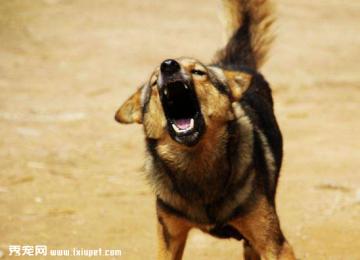 如果被投诉说狗狗叫声扰民怎么办?