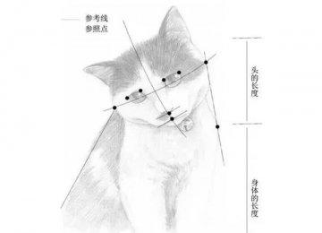 手把手教你宠物猫的素描教程【图文