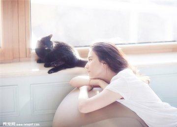刘亦菲穿白色衬衫与和领养的猫咪们