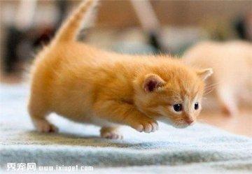 萌宠猫咪图片