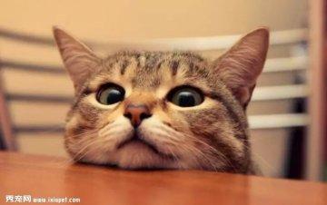 截止2018年,美国猫粮狗粮的销售额高达270亿美元!其三大趋势值
