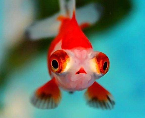养鱼可以修身养性,陶冶情操