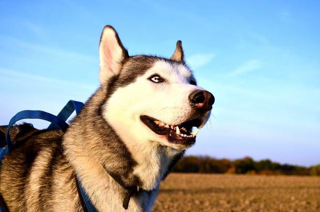 真致ZEAL软狗粮怎么样,真致ZEAL软狗粮是天然无添加剂狗粮吗?