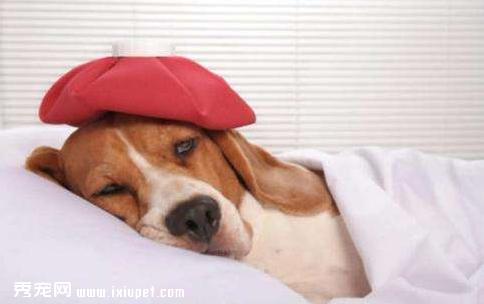 狗狗生病了应该怎么照顾
