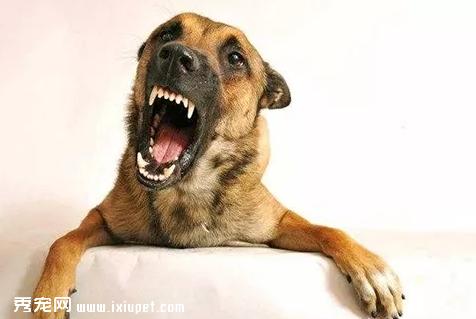 狗狗不听话应该打还是训?