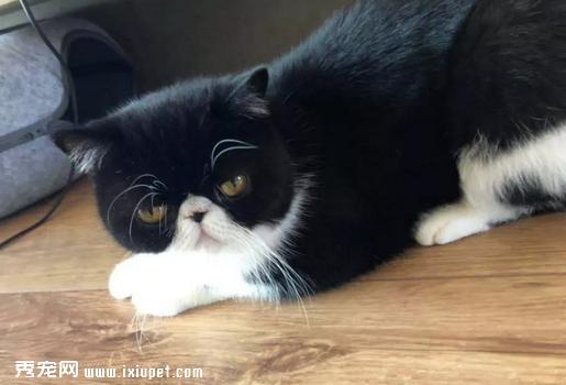 猫咪有寄生虫应该如何预防和治疗