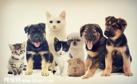 猫狗挑食是什么原因引起的,应该如何改善?