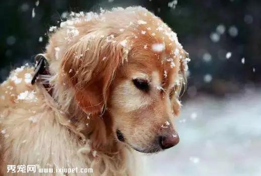 对狗狗的溺爱,有可能致它们死亡