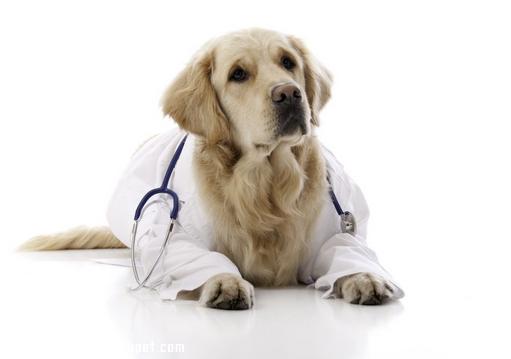 狗狗能不能常吃益生菌,狗狗吃益生菌有什么好