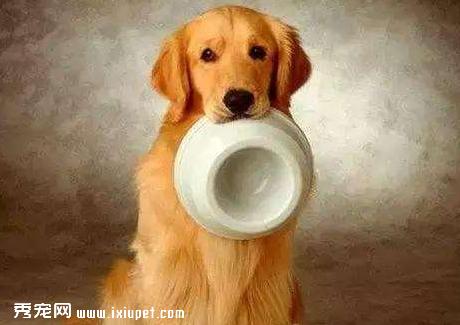 狗狗为什么突然胃口不好,应该给它吃什么?