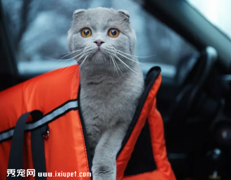 猫咪为什么会晕车,应该如何预防猫咪晕车?