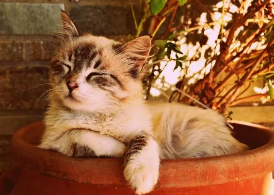 肠胃敏感的猫咪应该如何照顾?