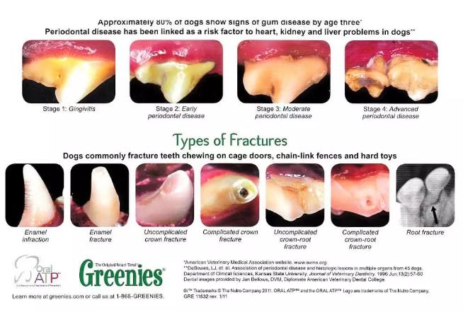 宠物牙周炎的诱因有哪些,宠物牙周炎该怎么治