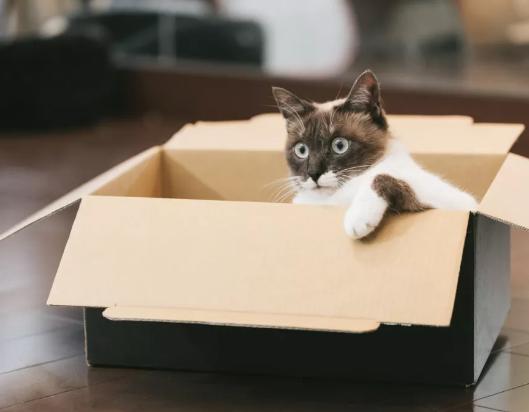猫进新家,你需要知道的5件事