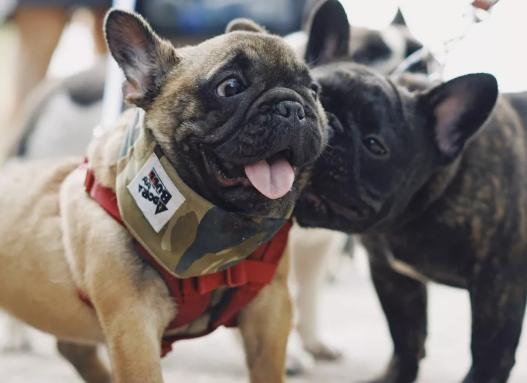 如何为狗狗挑选一个满意的对象