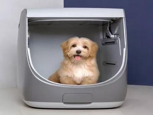 宠物洗澡新花样,宠物澡堂助力宠物消费新升级