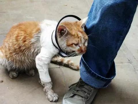 投喂流浪猫,我真的做错了吗?