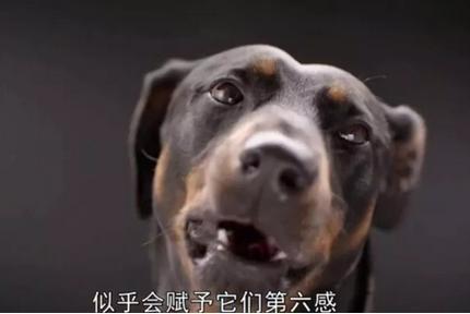 狗狗的嗅觉真的能识别癌症吗?