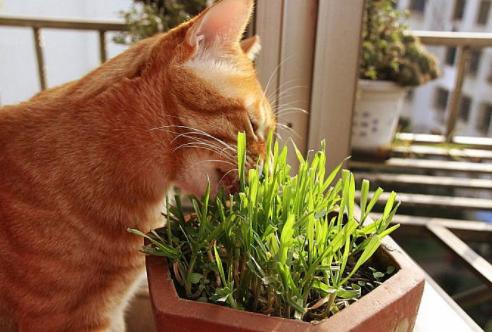 家里养这些植物对猫咪好,猫奴必读!